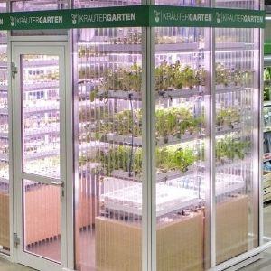 Quanto mais fresco melhor - Mercado alemão tem estufa com vegetais frescos